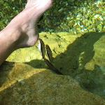 Fish nibble on your feet in the shallow pool