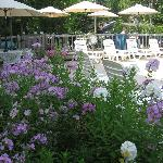 Back garden & deck