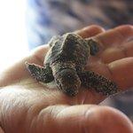 bebe tortue de l elebage