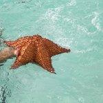 une rare etoile de mer