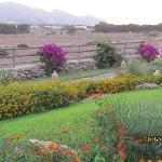 Il giardino delle Aloe 9
