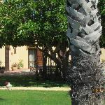 Il giardino delle Aloe 14