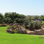 Il giardino delle Aloe 2