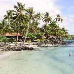 The fales are hidden beneath the shade of the coconut palms