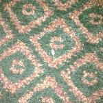 a couple of the sunflower seeds left behind by a previous guest. no vacuuming?