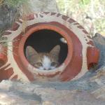 The hotel cat Garefield