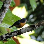 Mooie tropische vogels