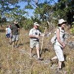 A bracing walk  through the bush