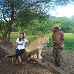 la vie en liberte des animaux sauvage