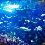 Coral Reef Gallery