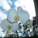 Beautiful live orchid