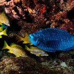Foto de Blue Water Divers