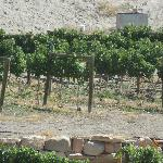 One of the many vineyards