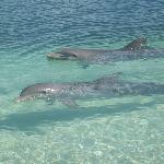 Delfinario en Playa Sirena, Cayo Largo