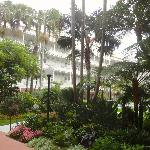Some of the Landscaping at the Hotel del Coronado