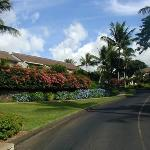 Photo of Maui Kamaole
