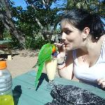 Sharing my smoothie with the lorrikeets!!