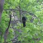 Visitor in the trees above our pop up