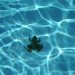 A friendly swimming companion