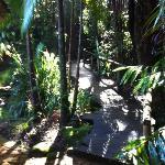 Walkway leading to the bush spa