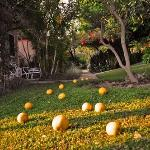 Photo of Bungalows Las Rosas