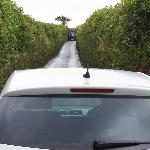 Narrow cornish road with oncoming tractor