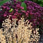 Front Garden plantings