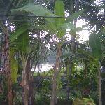 View of Paba river Hiding behind trees From Varandah