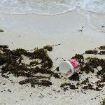 """Secchielli, e buste di plastica sul bagnasciuga della spiaggia """"privata"""""""