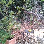 Sicilian lemon trees with wonderful odour
