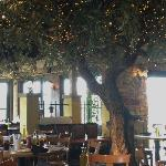 olive tree in dining area