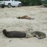 sea lions napping at beach near dock near hotel