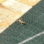 Our little friend on the shuffle board court