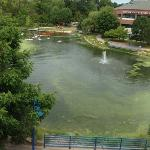 Pond view from room 330