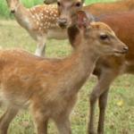 Amicalola Deer Park Foto
