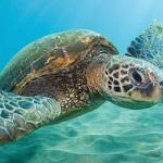 Cairns Premier Reef & Island Tours 사진