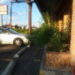Overgrown plants blocking the sidewalk