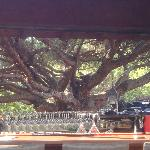 One of the tree's perfectly framed by the outside bar