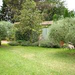 le jardin avec ses oliviers