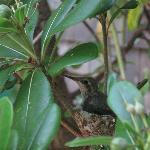 baby hummingbird in the garden