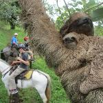 Enrique stood on his horse and snapped this Sloth and her baby with my camera!