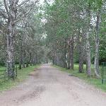 The driveway