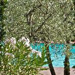 la piscina tra gli olivi