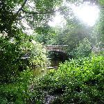 Rothey bridge from Daffodil Walk