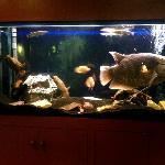 bel aquarium