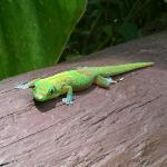 Gecko on the porch railing