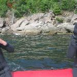 La mise à l'eau tout près des phoques