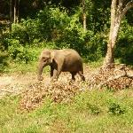 Elephant not far from Bamboo Bay