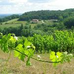 a view of one of the vineyards