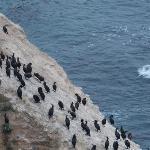 Cormorants outside our room